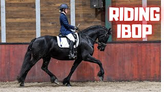 A perfect score! A lot of work for those few minutes to ride IBOP | Friesian Horses