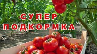Супер подкормка для помидоров, огурцов, перца и т. п. Срочно удобрите, чтобы получить СВЕРХУРОЖАЙ