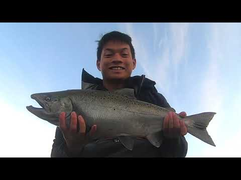 Catching CHINOOK, COHO, AND PINK SALMON On The Vedder River (Crazy!)