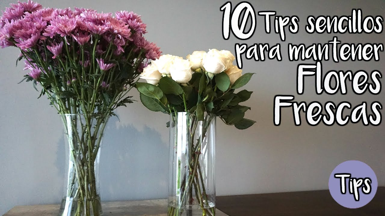 Flores Que Duren Frescas Por Más Tiempo 10 Tips Youtube