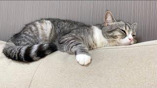 どこでもぴったりフィットして爆睡しちゃう猫がかわいすぎる…笑