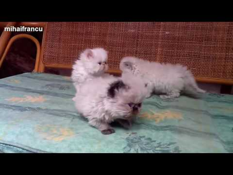Funny Cats And Kittens Meowing Compilation 2015