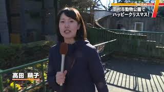 東京の羽村市動物公園では、トナカイと一緒に写真撮影ができるクリスマ...