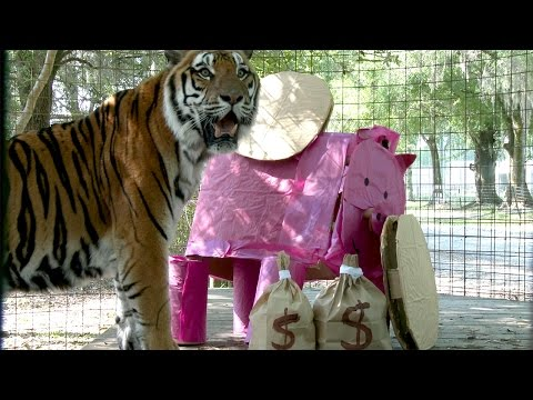 The Big Cats LOVE Give Day Tampa Bay