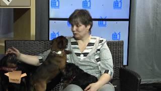 TEST.TV все о животных. Брюссельские гриффоны.(Надя Лаптева в прямом эфире на канале