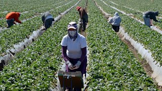 Revealed: What It's Like To Be A Migrant Farm Worker