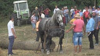 Concurs cu cai de tractiune - Paltinis, Botosoani 2017