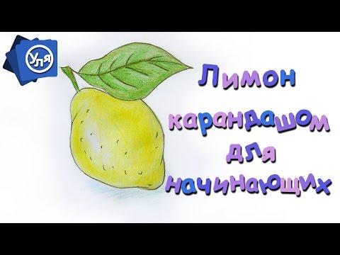 Авокадо – польза и вред, калорийность, как выбрать и