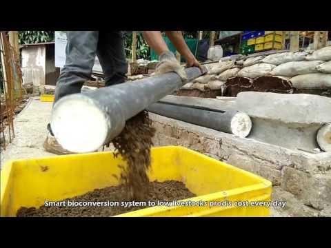 Cara Tepat Budidaya Maggot BSF.   0877 0555 9494 I 0813 2055 9494 (tlp, wa)