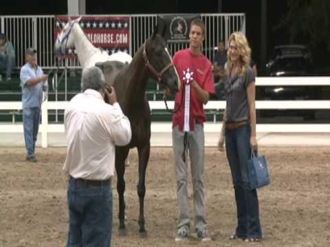 American Polo Horse Association - Horse Show 2012 -