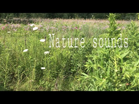 Nature sounds (no music) ASMR
