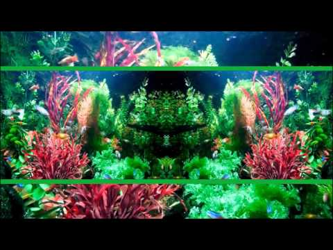 Aquarium☺HD♫☊ - Play Full Screen