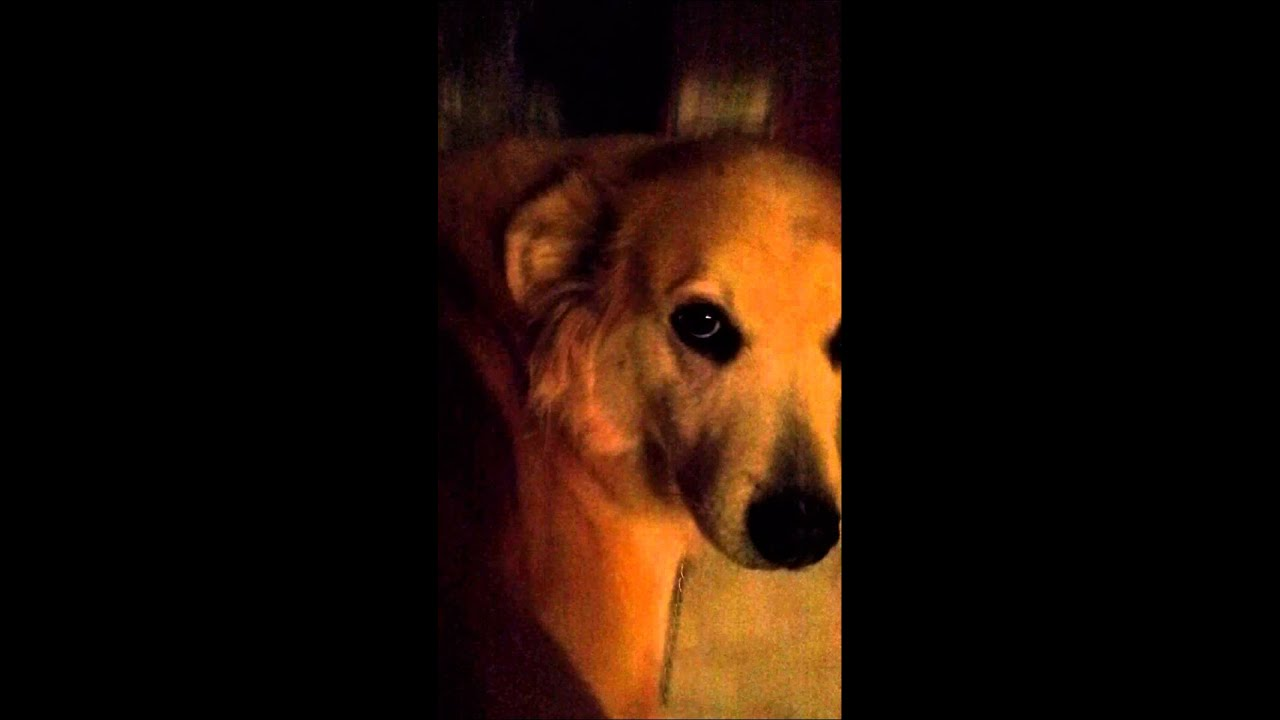 wounding dog brandy morace - 1280×720