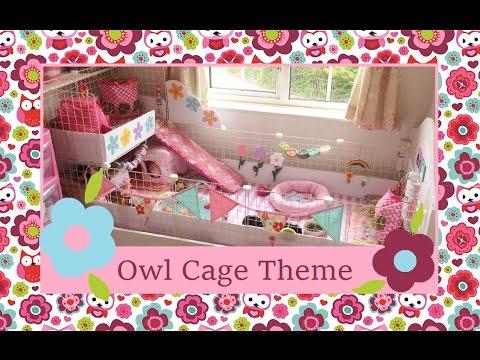 Owl Guinea Pig Cage Tour