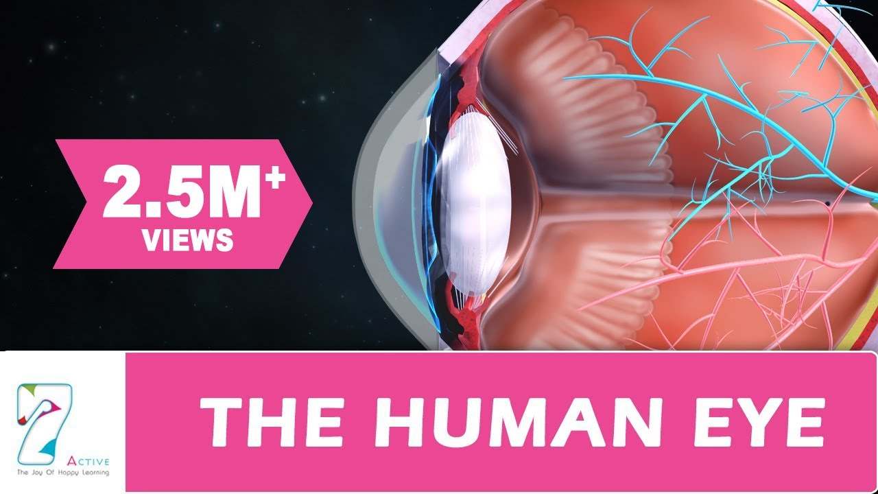 The human eye youtube ccuart
