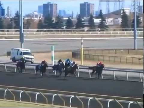 Www Woodbineracetrack