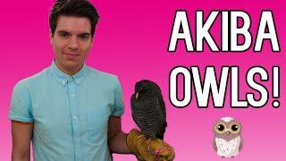AKIBA FUKUROU OWL CAFE - Tokyo Vlog #7