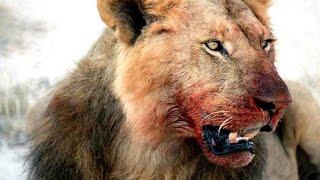 Самые опасные животные в мире 2015