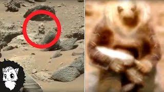Вы Не Поверите Но На Марсе Есть Животные [Белый Кот]