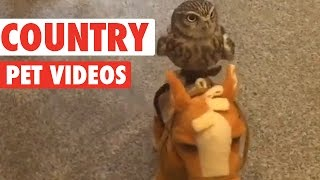 Fun Country Pets Compilation 2016