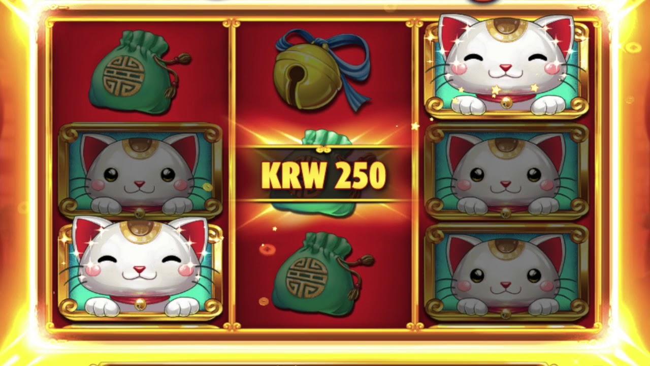 동물들과 함께하는 온라인카지노[플레이엔고] Big Win Cat 슬롯머신 솔레어 카지노
