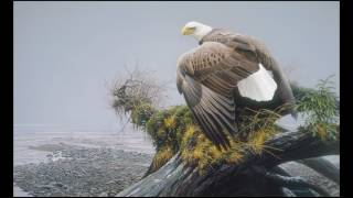 #08 Vantage Point Bald Eagle by Robert Bateman