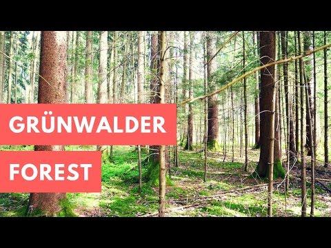 Grünwalder Forest - Travel Germany [4k]