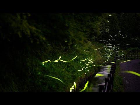 شاهد: حشرات تؤدي رقصتها المضيئة بلا جمهور في زمن كورونا  - 14:58-2020 / 7 / 11