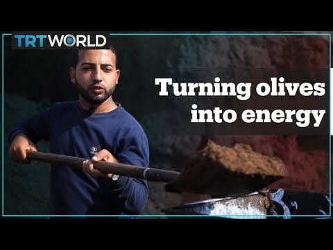 Olives are turned into energy in Gaza