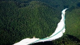 Help stop deforestation