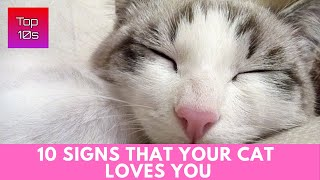 10 Signs That Your Cat Loves You