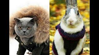 Денис TV - мои любимые в одежде/Кот Боня/Кролик Минина