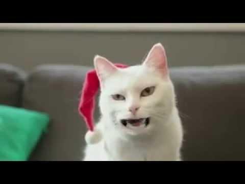 Фото приколы про котов -