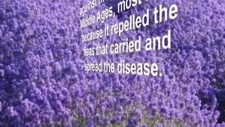 Lavender in Witchcraft