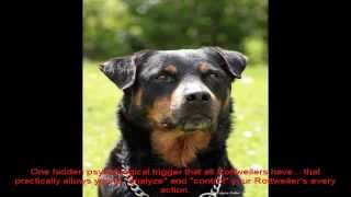 How To Potty Train A Rottweiler Puppy Video