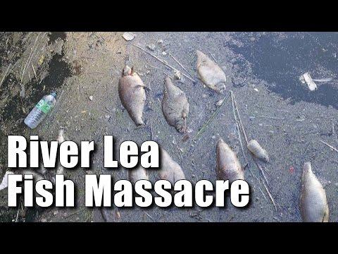 River Lea Fish Massacre