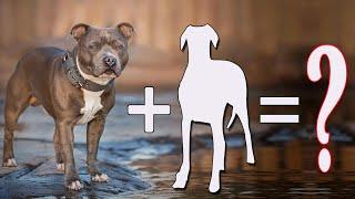 07 Amazing Staffordshire Bull Terrier Cross Breeds Dogs / Staffordshire Bull Terrier Mixes