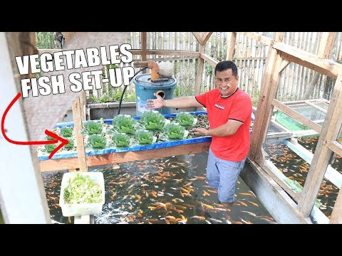 BUILDING HYDROPONICS  COLORED FISH TANK SET-UP