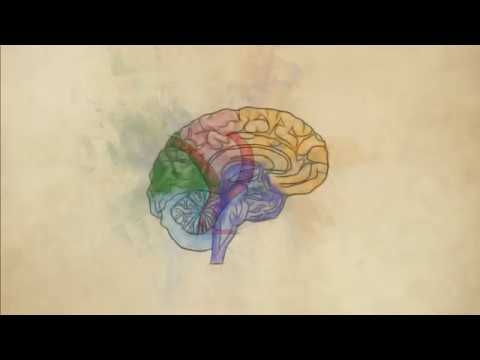 Brain Aneurysms And Blood Flow Dynamics