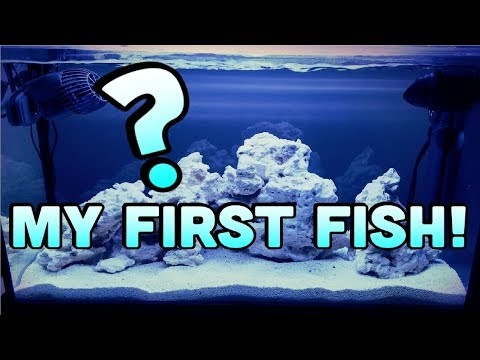 MY FIRST FISH!!! | BLUE DAMSEL