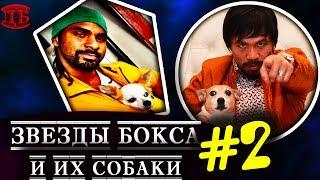Собаки лучших боксеров мира #2 |  ПРО БОКСЕРОВ