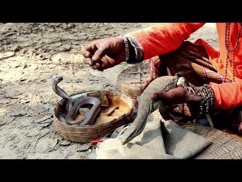 Snake Charming With Monitor Lizard.मदारी ने दिखाया ऐसा  देखकर हैरान रह गए लोग