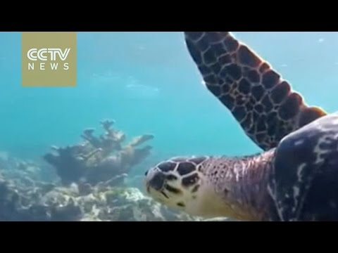 Global environmental conference discusses biodiversity