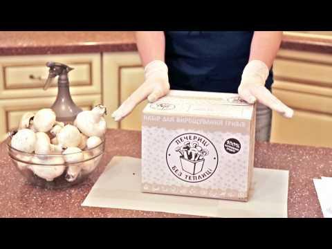 домашняя грибница грибная ферма инструкция