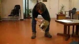 Puppy Aptitude Test - Blaze Part I