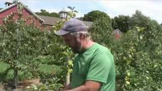 UMass Fruit Advisor: July 20, 2007-Honeycrisp 'yellows'
