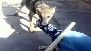 Köpeğin kulağını ısıran çocuk