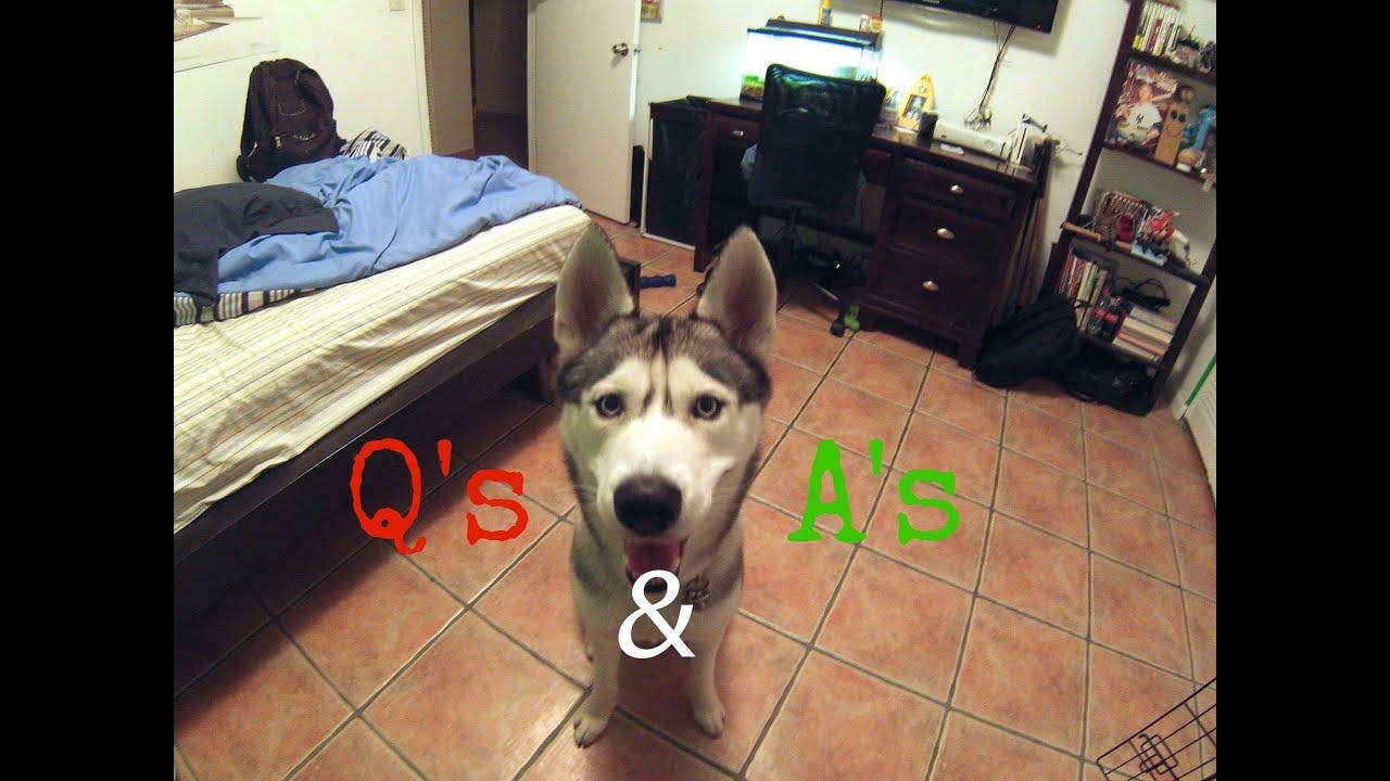 Husky Fan Questions & Answers Video!