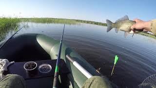 ШОК Карасёвый беспредел Вот это КАБАНЫ Рыбалка на КАРАСЯ Карасёвая РАЗДАЧА