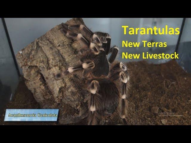 Ταραντούλες, Νέα Τερράριουμ και Νέο Livestock| Feeders Strs ep. 14